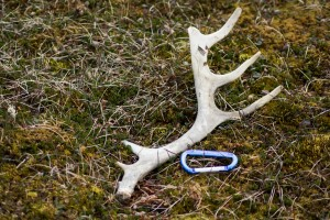 Saturday antler perspective